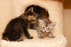 Two cute little kittens stock images