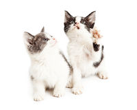Two cute little playful kittens Stock Photo