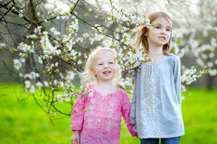 Two cute little sisters in blooming cherry garden Royalty Free Stock Image