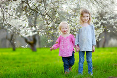 Two cute little sisters in blooming cherry garden Royalty Free Stock Photos