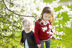 Two cute little sisters in blooming cherry garden Stock Photos