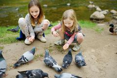 Two cute little sisters feeding birds on summer day. Children feeding pigeons and ducks outdoors stock images