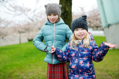 Two cute little sisters having fun in blooming cherry garden Stock Photography