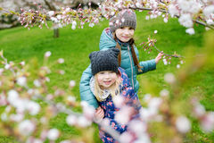 Two cute little sisters having fun in blooming cherry garden Stock Image