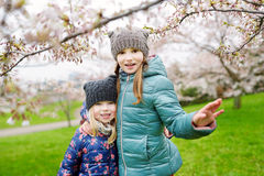 Two cute little sisters having fun in blooming cherry garden Stock Photo