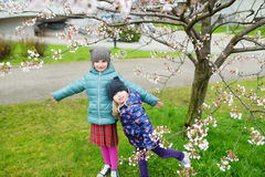 Two cute little sisters having fun in blooming cherry garden Royalty Free Stock Photo