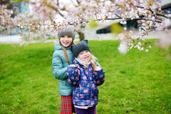 Two cute little sisters having fun in blooming cherry garden Royalty Free Stock Images