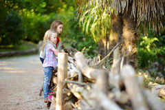 Two cute little sisters watching animals in the zoo on warm and sunny summer day. Children watching zoo animals standing by the fe Stock Image
