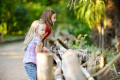 Two cute little sisters watching animals in the zoo on warm and sunny summer day. Children watching zoo animals standing by the fe Stock Photos