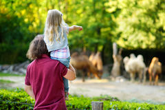 Two cute little sisters watching animals in the zoo on warm and sunny summer day. Young father and his little daughter watching camels in the zoo on warm and royalty free stock photo