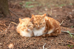 Two cute lovely young cats Royalty Free Stock Image