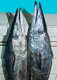 Two cute mackerel fishes, at a wet market in the Philippines stock photo