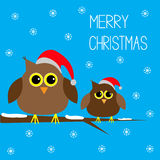 Two cute owls. Christmas hats. Snowflakes. Merry C Royalty Free Stock Image