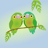 Two cute parrots. A pair of green parrots sitting next to eachother Stock Image
