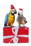 Two cute parrotts on gift box Stock Images