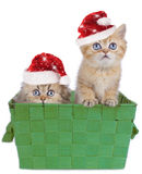 Two cute persian kitten with Santa hat Stock Photos