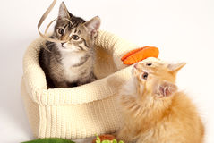 Two cute playful kittens Stock Images