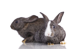 Two cute rabbit Stock Photos