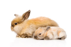 Two cute rabbits in profile. isolated on white background Royalty Free Stock Photos