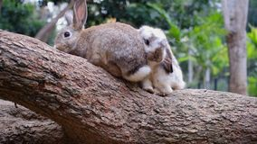 Two cute rabbits sitting on wooden branch stock footage