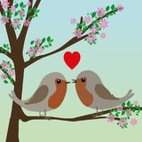 Two cute robins in love. In a in a blossom tree Royalty Free Stock Photo