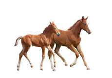 Two cute siblings horse foals running Stock Image
