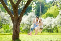 Two cute sisters having fun on a swing in blossoming old apple tree garden outdoors on sunny spring day stock image