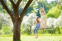 Two cute sisters having fun on a swing in blossoming old apple tree garden outdoors on sunny spring day stock photo