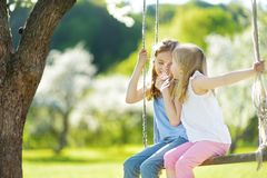 Two cute sisters having fun on a swing in blossoming old apple tree garden outdoors on sunny spring day stock images