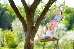 Two cute sisters having fun on a swing in blossoming old apple tree garden outdoors on sunny spring day. Spring outdoor activities for kids royalty free stock image
