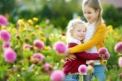 Two cute sisters playing in blossoming dahlia field. Children picking fresh flowers in dahlia meadow on sunny summer day. Royalty Free Stock Photo