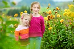 Two cute sisters playing in blossoming dahlia field. Children picking fresh flowers in dahlia meadow on sunny summer day. Stock Images