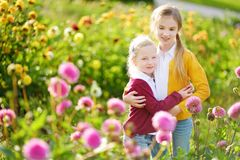 Two cute sisters playing in blossoming dahlia field. Children picking fresh flowers in dahlia meadow on sunny summer day. Royalty Free Stock Photos