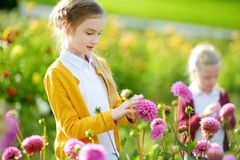 Two cute sisters playing in blossoming dahlia field. Children picking fresh flowers in dahlia meadow on sunny summer day. Royalty Free Stock Images