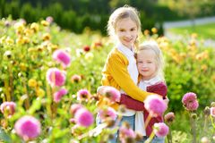 Two cute sisters playing in blossoming dahlia field. Children picking fresh flowers in dahlia meadow on sunny summer day Royalty Free Stock Photo