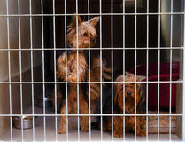 Two cute strayed dogs in dog shelter. stock photos