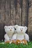 Two cute teddy bears sitting before a wall of an old wood. Idea Stock Images