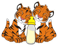 Two cute tigers Stock Image