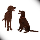 Two cute vector dogs Royalty Free Stock Images