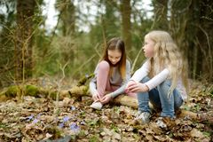 Two cute young sisters having fun during forest hike on beautiful early spring day. Active family leisure with kids. Family fun royalty free stock photo