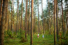 Two cute young sisters having fun during forest hike on beautiful summer day. Active family leisure with kids royalty free stock photos