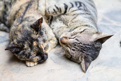 Two cutes cats sleeping Royalty Free Stock Photos
