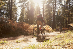 Two cyclists biking on a forest trail, backlit, back view Stock Photos