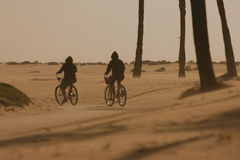 Two cyclists cycling in a desert braving sand and wind. Two cyclists cycling in a desert, braving sand and wind. Silhouette of cyclists and palm trees Stock Photo