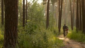 Two Cyclists on Forest Trail 2. A beautiful journey bikers on a forest path stock video