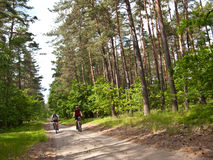Two cyclists in green forest Royalty Free Stock Photography