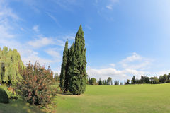 Two cypress on a green grassy lawn Royalty Free Stock Photo