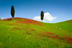 Two cypresses Stock Photography
