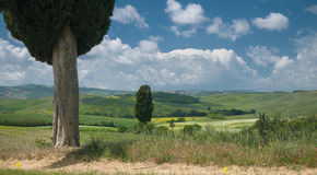 Two cypresses in wide Tuscan landscape Royalty Free Stock Photography