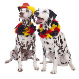 Two dalmatian dogs with soccer equipment Royalty Free Stock Photography